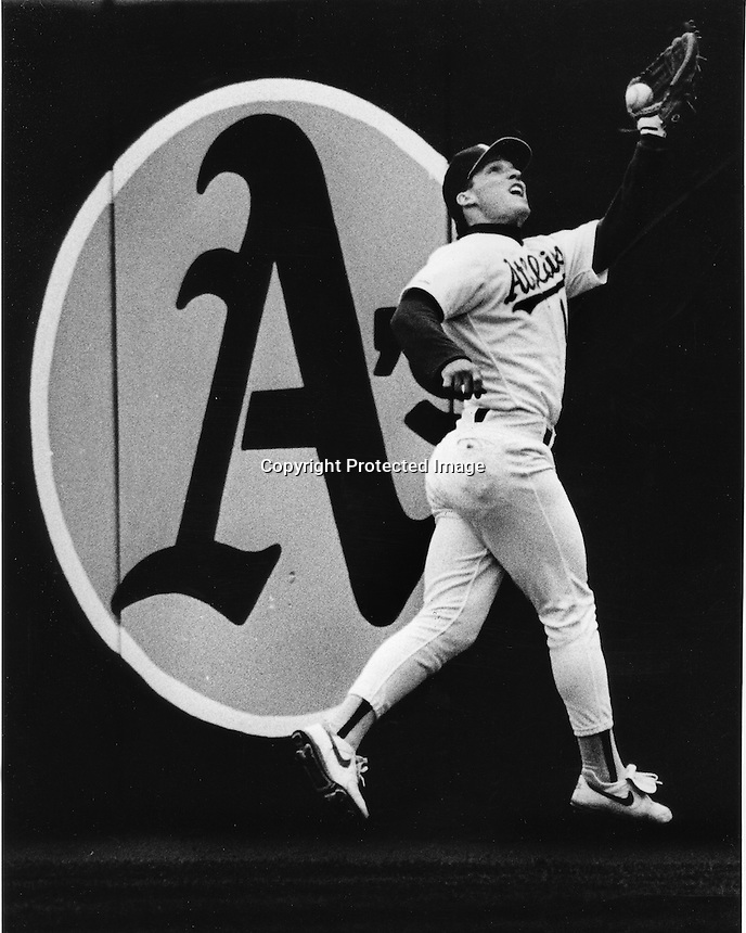 Oakland Athletics Lance Blankenship runs down fly ball.<br />