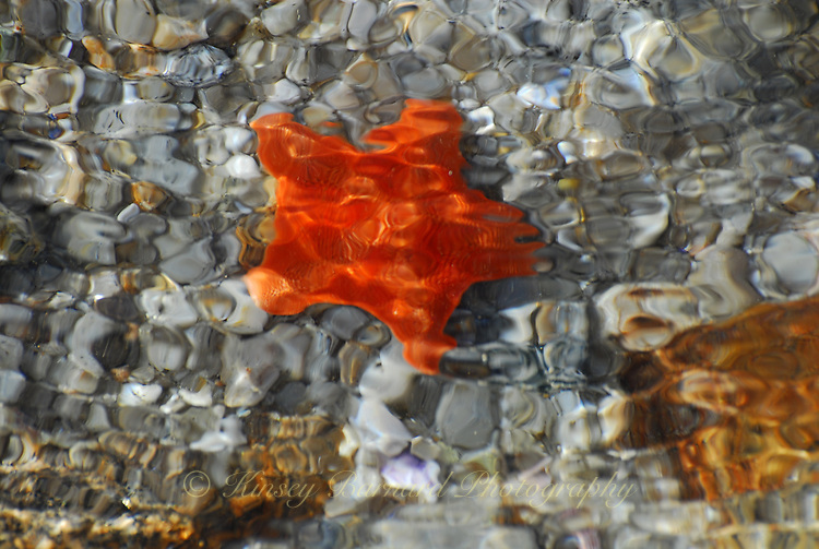 &quot;STARFISH&quot;<br />