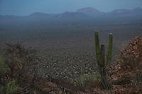 Desert of Desemboque in Sonora