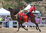 Kody Burrell races in the 54th International Camel Races in Virginia City, Nev., on Friday, Sept. 6, 2013.  <br /> Photo by Cathleen Allison