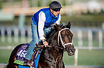 October 30, 2019: Breeders' Cup Mile entrant Lucullan, trained by Kiaran P. McLaughlin, exercises in preparation for the Breeders' Cup World Championships at Santa Anita Park in Arcadia, California on October 30, 2019. Michael McInally/Eclipse Sportswire/Breeders' Cup/CSM