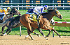 Siete de Oros winning at Delaware Park on 10/12/15