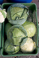 Cabbage heads for sale at a farmers market in Poland. Rawa Mazowiecka Central Poland