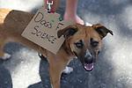 Dogs for Science.  Santa Barbara