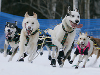Jon Korta's lead dogs round a turn in Anchorage on Saturday March 1st during the ceremonial start day of the 2008 Iidtarod Sled Dog Race.