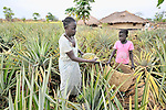 Christine Fatina, a United Methodist, harvests pineapples with her daughter on their farm in Pisak, Southern Sudan... NOTE: In July 2011, Southern Sudan became the independent country of South Sudan