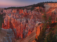 730750037a soft dawn lighting turns the hoodoos in agua canyon brilliant red and pink in bryce canyon national park utah