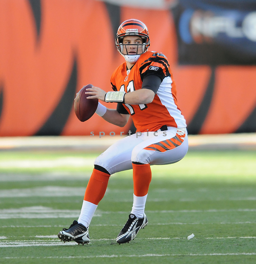 RYAN FITZPATRICK, of the  Cincinnati Bengals , in action  during the Bengals game against the Kansas CIty Chiefs on December 29, 2008 in Cincinnati, OH...Bengals win 16-6