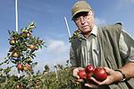 Foto: VidiPhoto<br /> <br /> BUREN &ndash; Taxateur Faunaschade controleert woensdag de appels en peren bij fruitteler Anton van Veenendaal in Buren. Het fruit van de ondernemer blijkt flink beschadigd te zijn door hongerige kauwen, kraaien en mezen.