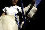 """pvcGOATMILK1/9-12-05/JP2/ASEC.  A three year old Saanen goat named """"Sweetie"""" is milked after being shown in the New Mexico State Fair Open Dairy Goat Show by clients and staff of """"The Berlin Center"""", a residential treatment facility for youth located in Los Lunas, N.M. , photographed Tuesday Sept. 20, 2005.  The young girl holding Sweetie under the chin is Sara (CQ, no last names or faces due to confidentiality issues), who is a client.  (Pat Vasquez-Cunningham/Journal)"""
