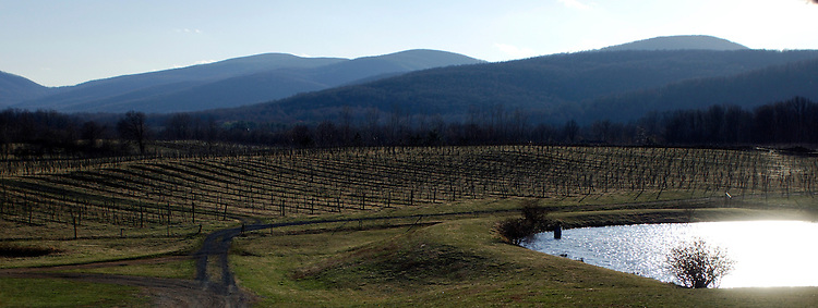 Oasis Winery says they are rated top 10 in the world. The vineyards are located in Hume Virginia.