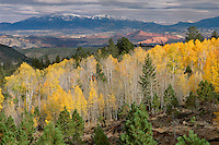 Ponderosa pine and aspen on Boulder Mountain<br />