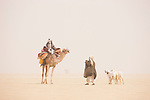 Chad (Tchad), North Africa, Sahara, Borkou District, Chadian men with camel and goats meeting in desert during a sand storm