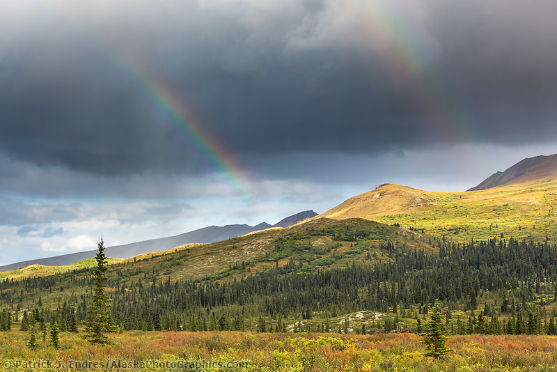 A double rainbow arcs over the tundra and taiga of Denali National Park, Alaska.
