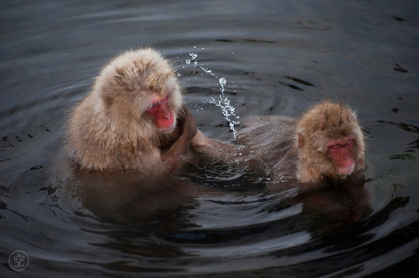 A Japanese macaque splashes water while grooming a younger monkey in the hot springs bath at Jigoku-dani, Nagano, Japan.