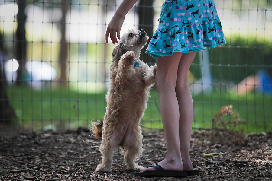 A dog named Sadie solicits affection from a girl in the small dog section of the Normandale Dog Park in Portland.
