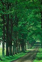Tree lined road, Louisville, Kentucky