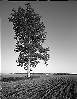 &quot;Solitary Tree #2&quot;<br />