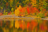 The Acadian forest in autumn foliage reflected in Indian Brook. <br />