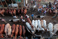 Majority of the people in India practice Hinduism. The Hindu religion doesn't allow cow killing as they consider the cow as a mother. For this reason, Indian cows have a big market in Bangladesh which is a Muslim country. A great number of cows get smuggled at the time of the religious festival called Eid-Ul-Azha (Qurbani). It is assumed that border security authorities from both sides also involved in the smuggled cows' trading. Many smugglers who don't maintain syndicate networking also die during this period.