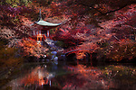 Bentendo Hall with a bridge over a pond at Daigo-ji temple, in a beautiful red colorful autumn scenery surrounded by Japanese maple trees. Shimo-Daigo part of Daigoji complex in fall colors. Shingon Buddhist temple in Fushimi-ku, Kyoto, Japan 2017.