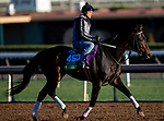 OCT 24: Breeders' Cup Mile entrant Bolo, trained by Carla Gaines, gallops at Santa Anita Park in Arcadia, California on Oct 24, 2019. Evers/Eclipse Sportswire/Breeders' Cup