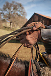 Weathered hands and lasso, Dell'Orto outfit branding, doctoring and marking cattle during a clear day in the Sierra Nevada Foothills, Amador County, Calif.