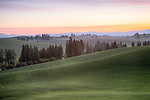 Idaho, North Central, Latah County, Moscow. Pre-dawn light on the rolling hills of winter wheat of the Idaho Palouse.