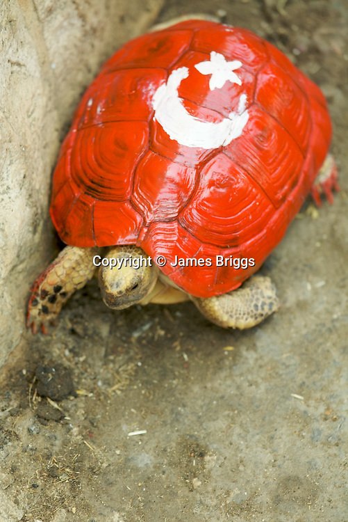 Palestinians from the village of Bil'in honour those killed during the Israeli raid on the Mavi Marmara aid ship during the villager's weekly protest against the controversial West Bank barrier, near Ramallah on 04/06/2010. Here a tortoise has been painted with the national flag of turkey, the nationality of a number of those killed while trying to breach Israel & Egypt's blockade of the Gaza strip.