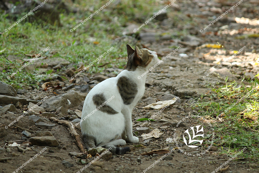 Pretty beautiful white cat looking up eagerly keenly in forest of Junagadh