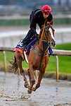 November 1, 2018: Princess Yaiza (IRE), trained by Gavin Cromwell, exercises in preparation for the Breeders' Cup Filly & Mare Turf at Churchill Downs on November 1, 2018 in Louisville, Kentucky. Michael McInally/Eclipse Sportswire/CSM