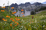 Backpacker in giant wildflower meadows near Round Lake in the Trinity Alps wilderness Four Lakes loop backpacking trail in California.