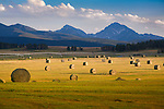 Round hay bales and the peaks of the Anaconda Pintler mountain range