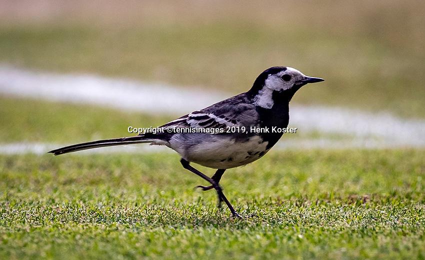 London, England, 5 July, 2019, Tennis,  Wimbledon, Bird on Centercourt<br /> Photo: Henk Koster/tennisimages.com