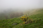 Foggy weather scarp slope of chalk downs near Knap Hill, Alton Barnes, Wiltshire, England, UK
