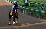 LOUISVILLE, KENTUCKY - APRIL 29: War of Will, trained by Mark Casse, exercises in preparation for the Kentucky Derby at Churchill Downs in Louisville, Kentucky on April 29, 2019. Scott Serio/Eclipse Sportswire/CSM