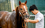 LOUISVILLE, KENTUCKY - MAY 01: Master Fencer, trained by Koichi Tsunoda, gets a bath after exercising in preparation for the Kentucky Derby at Churchill Downs in Louisville, Kentucky on May 1, 2019. John Voorhees/Eclipse Sportswire/CSM