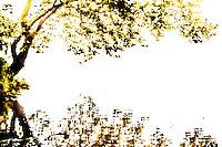 A golden tree hangs over a part of the Arkansas River near Toadsuck park.
