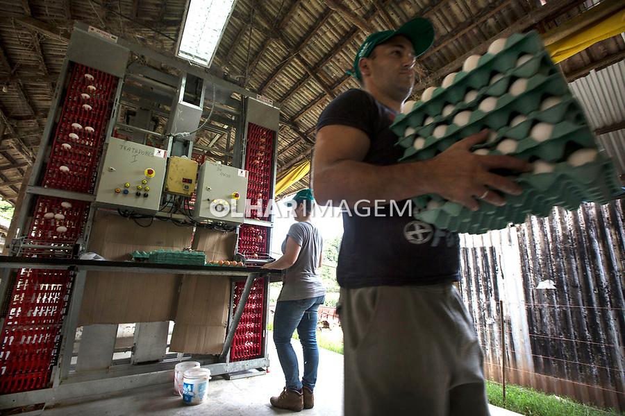 Granja de produçao de ovos. Cooperativa de Agricultores e Agroindustrias Falmiliares, CAAF de Caxias do Sul, Rio Grande do Sul. 2018. Foto Ubirajara Machado