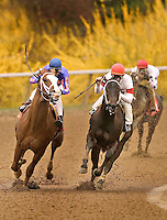 Racing on the dirt with forsythia in the background of the final turn
