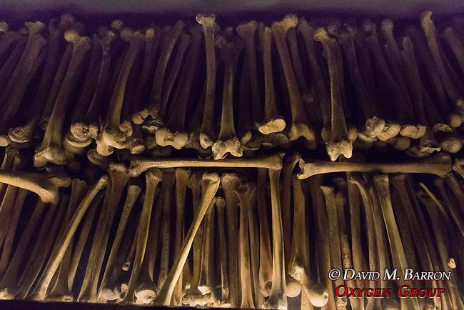 Bones Of People Killed In 1994 Genocide, Kigali Genocide Museum
