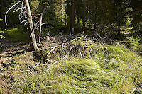 FOREST_LOCATION_90125