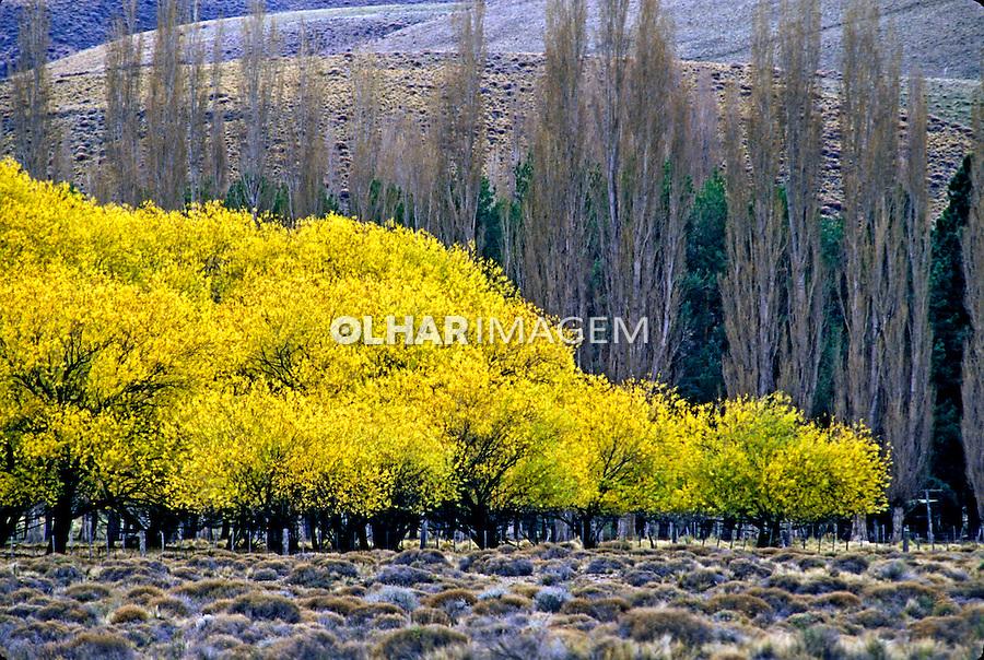 Árvores em Bariloche. Argentina. 1997. Foto de Ricardo Azoury.