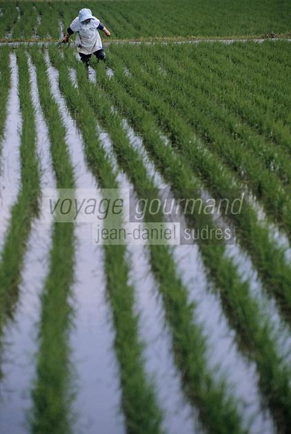 Asie/Japon/ENV. de Tokyo: Détail d'une rizière - Femme récoltant le riz