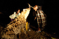 "one of the actresses of the voices of youth theater company, feeds a wild hyena, under the supervision of the man that has been feeling the animals for 30 years   during the tour  of the ""voices of youth"" theater project in Harar, Ethiopia on Friday August 11 2006..Voices of Youth, a play about the challenges faced by Ethiopian children: HIV, domestic violence, homelessness, poverty, drug addiction, and sexual abuse, a potpourri of deprivation, written by the children themselves. Their parents died of AIDS, and many are themselves infected. Quite a few have firsthand experience of the themes they are portraying. They are staging their own lives. .Ethiopia is one of the countries most affected by HIV/AIDS. Of its population of 77 million, three million are HIV-positive, according to government statistics. Every day sees 1,000 new infections. A million children under 14 have lost one or both parents to AIDS, and 200,000 children are living with AIDS. That makes Ethiopia the country with the most HIV-positive children."