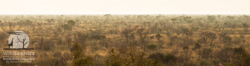 Kalahari landscape strewn with trees as seen from an elevated view at sunrise.