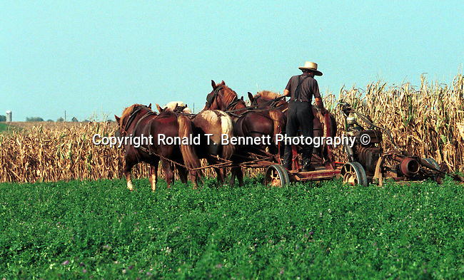 Amish farmer cuts corn field Commonwealth of Pennsylvania, Keystone state, Thirteen Colonies, Constitution Fine Art Photography by Ron Bennett, Fine Art, Fine Art photography, Art Photography, Copyright RonBennettPhotography.com © Fine Art Photography by Ron Bennett, Fine Art, Fine Art photography, Art Photography, Copyright RonBennettPhotography.com ©