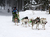 2nd February 2019, Thuringia, Frauenwald, Germany; Sled dog handler Mikolaj Wlodarczyk from Poland is on his way with his team at a sled dog race. 120 mushers from five nations with their huskies, samoyeds, malamutes or Greenland dogs started.