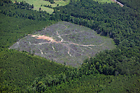 Aerial view of clear cutting, rural forest, Alabama