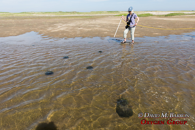 Mary Observing  Horseshoe Crabs